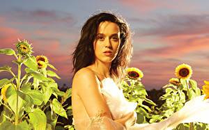 Картинка Katy Perry Подсолнухи Поля Музыка Знаменитости Девушки
