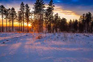 Картинки Времена года Зима Леса Рассветы и закаты Снег Деревья Природа