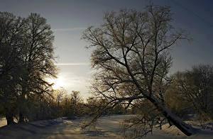 Фотография Сезон года Зима Рассветы и закаты Снег Деревья Природа