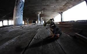 Фотографии Креатив Собака Противогазе Доски Сидящие
