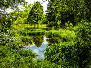 Картинка Германия Парки Пруд Мюнхен Бавария Трава HDRI Природа