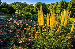 Обои Германия Парки Розы Мюнхен Кусты Westpark Природа