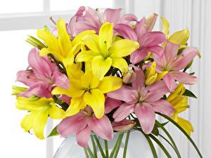 Картинки Лилии Много Желтых Розовый Цветы