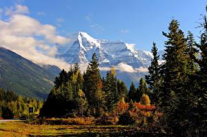 Картинка Канада Парк Гора Ели Mount Robson Природа