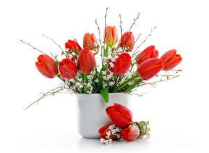 Фотографии Тюльпан Красный Ваза Цветы