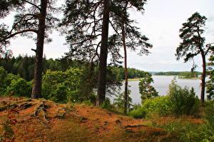 Фотография Россия Реки Парки Дерево Монрепо Выборг Природа