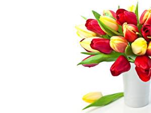 Картинки Тюльпан Вазы цветок