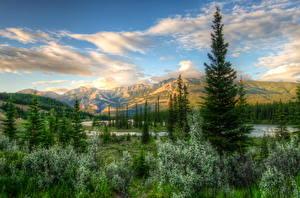 Картинки Пейзаж Канада Парки Небо HDRI Ели Кусты Джаспер парк Природа