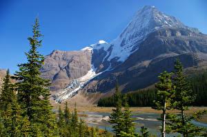 Картинка Канада Парк Горы Ели Mount Robson Природа