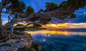 Картинка Австралия Реки Рассветы и закаты Деревья Lincoln Природа