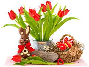 Картинка Праздники Пасха Кролик Тюльпан Корзины Яйцами Красных Цветы