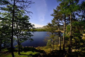 Картинки Шотландия Озеро Дерево Траве Glasgow Природа