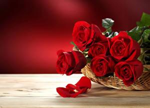 Обои Розы Красный Корзинка Лепестки Цветы