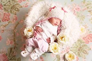 Фото Розы Младенцы Спящий Шапки ребёнок