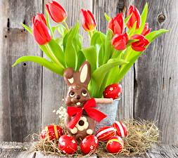 Картинки Тюльпаны Праздники Пасха Шоколад Кролики Красный Яйца Бантик Цветы