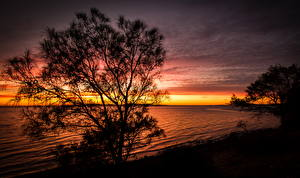 Фотографии Австралия Речка Рассветы и закаты Небо Деревья Port Lincoln Природа