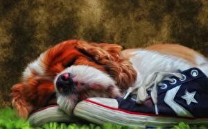 Картинки Собака Рисованные Спаниель Сон Морды Кинг чарльз спаниель Животные