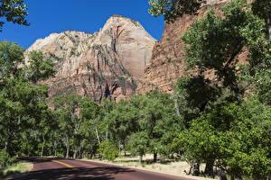 Фотография Америка Парки Гора Дороги Гранд-Каньон парк Деревьев Arizona Природа