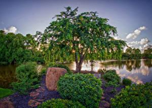 Обои Сады Пруд Майами Деревья Кусты Morikami japanese garden Природа фото
