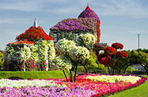 Обои ОАЭ Сады Петунья Дубай Газон Miracle garden Природа