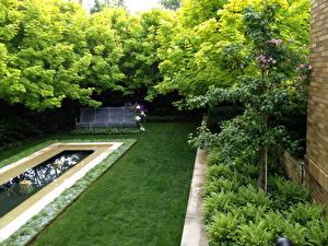 Обои Сады Плавательный бассейн Газон Трава Природа