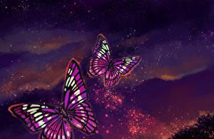 Картинка Бабочка Рисованные Животные