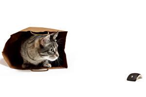 Картинка Кошки Компьютерная мышь животное