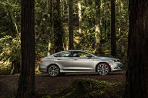 Картинки Chrysler Леса Серебряный Металлик Сбоку Ствол дерева Седан 2015 200 sedan
