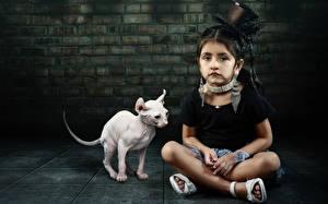 Обои Кошки Сфинкс кошка Девочки Шляпе Сидит Дети