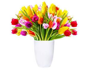 Фото Тюльпаны Много Вазе цветок