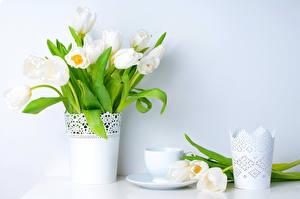 Картинка Тюльпан Белый Ваза Чашка цветок