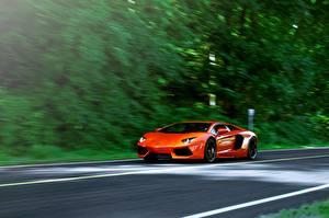 Фотографии Lamborghini Оранжевый aventador lp700-4 Автомобили