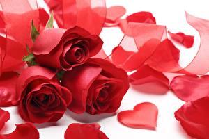 Обои Розы Праздники День святого Валентина Красный Сердце Лепестки Цветы