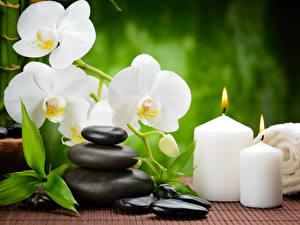 Обои Орхидеи Свечи Камень Белые Физиотерапия цветок