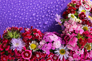 Картинка Гвоздика Астры Много Цветы