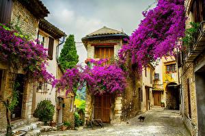 Фотографии Франция Дома Бугенвиллея Улиц Nice Города