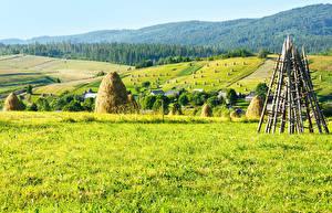 Фотографии Украина Поля Леса Карпаты Трава Природа
