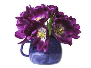 Обои Тюльпан Вазе Фиолетовый Цветы