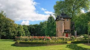 Фотографии Бельгия Сады Газон Кусты Coloma Rose Garden Природа