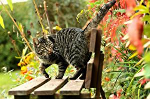 Картинки Коты Скамья Животные