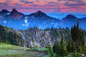 Фото Штаты Пейзаж Горы Вашингтон Ель Маунт-Рейнир парк