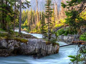 Обои Канада Парки Реки Леса HDRI Ели Kootenay Природа