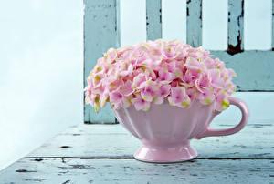 Фото Гортензия Розовые Чашке Цветы