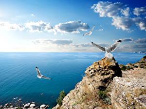 Фотографии Россия Берег Море Небо Чайка Крым Облако Природа