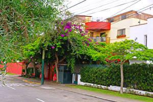 Картинки Перу Дома Улица Деревьев Lima город