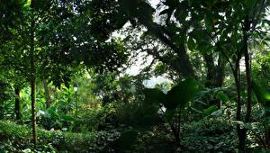 Картинка Сингапур Парк Дерева Кусты Природа