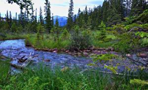 Фотография Канада Парки Речка Деревья Джаспер парк