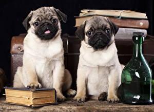 Обои Собака Мопса Двое Бутылки Книга Животные