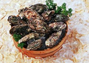 Фотография Морепродукты Лед мидии Продукты питания