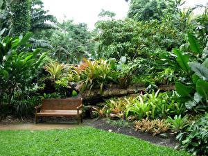 Обои Австралия Сады Кусты Скамейка Flecker Botanic Gardens Природа